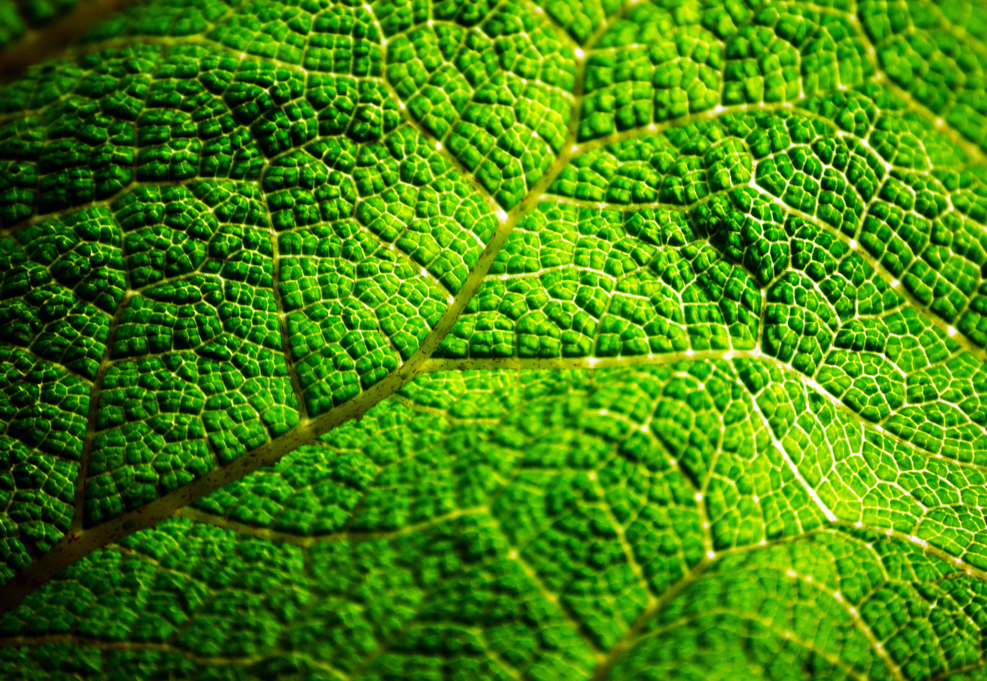 green-leaf-1340466788fks